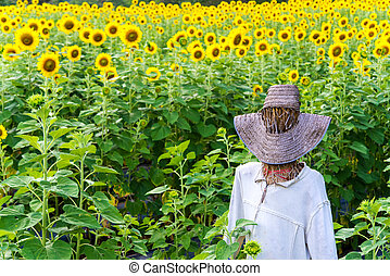 Scarecrow in the Sunflower field