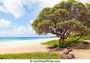 kealia beach at kauai island