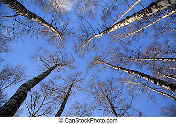 top of birches
