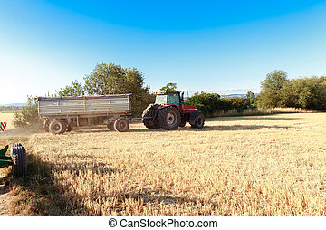 Tractor trailer truck. - Tractor trailer truck at harvest on...