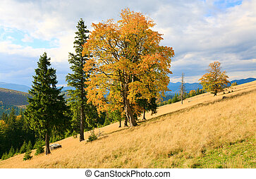Lonely trees on autumn mountainside