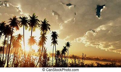 Tropical background with palm trees