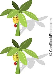 Banana tree with banana fruit vector in flat style