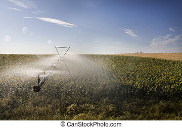 Irrigation system on sunflower field