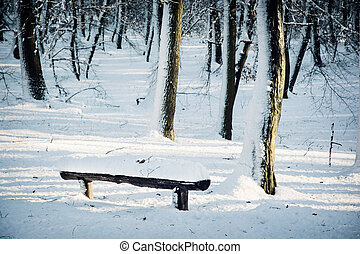 Snow covered bench in winter forest