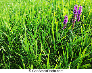 Green grass with one flower