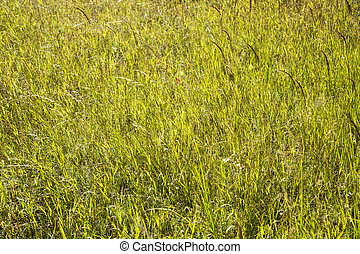 close up shot of a green meadow in summer