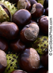 Heap of Shiny Brown Conkers - Heap of rich brown conkers,...