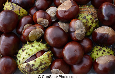 Pile of Shiny Horse Chestnut Fruit - Pile of conkers, the...