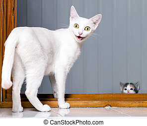 Funny Crazy Cat - Funny evil white cat with open mouth
