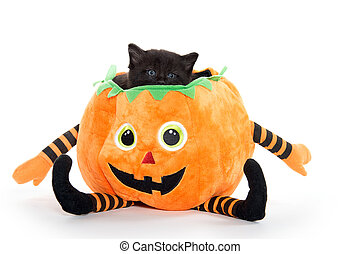 Cute black kitten in pumpkin - Cute black kitten sitting...