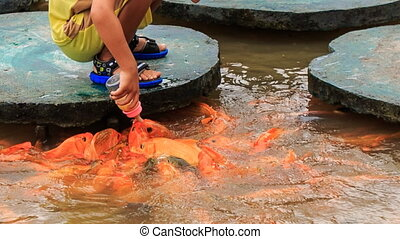 closeup child feeds fish in lake from planked footways in...