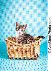 charming kitten tidy in basket
