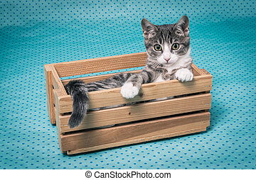looking out the wooden box - little gray tiger kitten lying...