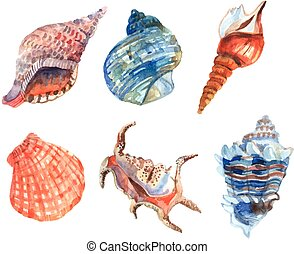 Watercolor Shell Set - Watercolor shell starfish...