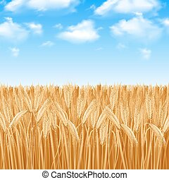 Wheat Field Background - Golden yellow wheat field and...