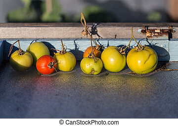 Red and Green Tomatoes - Red Green Tomatoes