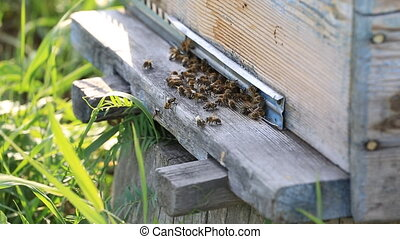Honey bees swarming and flying around their beehive HD