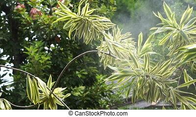 Mist garden water coolant spray system