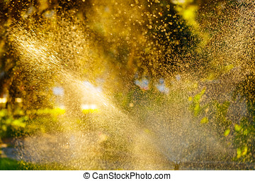 Sprinkle in the park. Water drops on the plants. - Sprinkle...