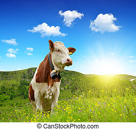 The Cow  - Cow in the meadow