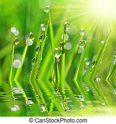 dew drop - Fresh green grass with dew drop closeup. Nature...