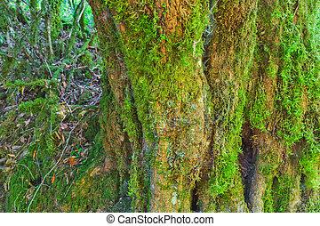 Mossy tree bark texture
