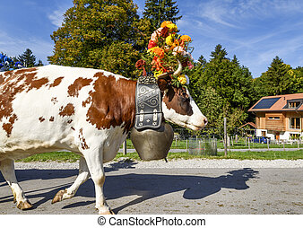transhumance event in Charmey - Charmey, Fribourg,...