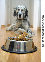 Quick Make a wish - Dog in front of his Birthday cake with...