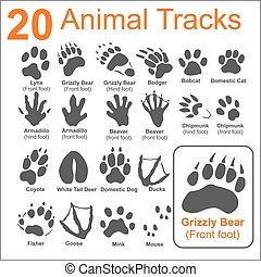 Animals Tracks - vector set - 20 Animals Tracks on white...