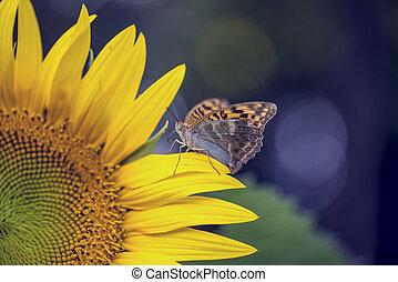 borboleta, Marrom, girassol, beleza, natureza, pétala, sentando,  -, amarela, milagre