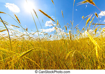 季節, 概念, 收穫
