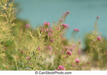 Pink flowers lying near lake. Focus on the flower