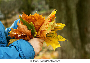 Autumn walk - The image of hands of a child in a blue...