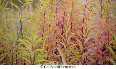 autumn grass swaying in wind - autumn grass swaying in the...