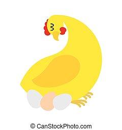 Chicken sitting on eggs. Farm bird nests baby birds. Chicken hen.
