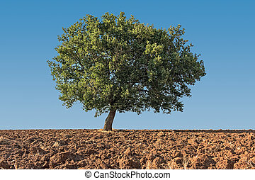 solitaire tree on ground in blue sky