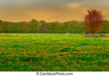 Cows and Horses Grazing in the Floodplain of Netherlands
