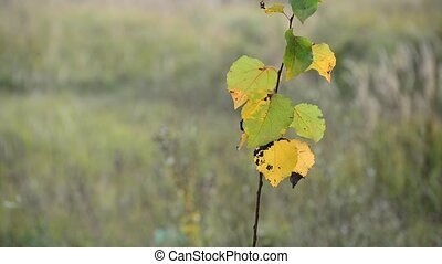 Young branches with yellow autumn leaves in wind