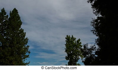 Time Lapse Cirrus Clouds Trees - Cirrus Clouds In Blue Sky...