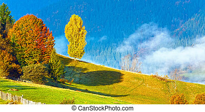 Colorful  trees on mountainside