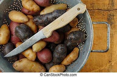 Variety of Fingerling Potatoes in Colander - Variety of...