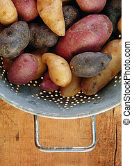 Variety of Fingerling Potatoes in Collander - Fingerling...