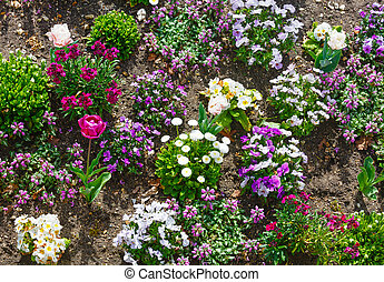 Blossoming varicolored flowerbed - Blossoming varicolored...