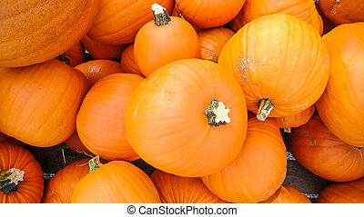 Orange pumpkins as background, top view