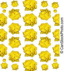 Isolated Yellow Rose Photo Pattern - Beautiful yellow rose...