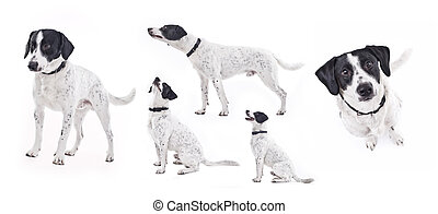 Domestic dog in different poses - Beautiful domestic dog in...