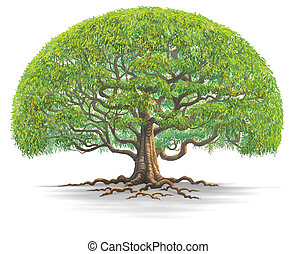 big tree -  A big tree isolate on white background