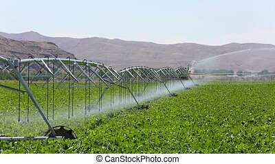 Crop Irrigation Pivot System - A modern center pivot crop...