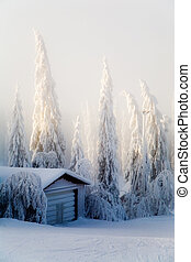 Winter scene with forest covered with thick snow